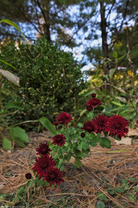Zmetro.com: Gardening Archives