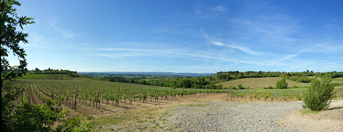 O'Vineyards
